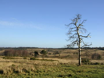 AshdownForestView